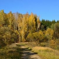 Сказки осеннего леса :: Miola