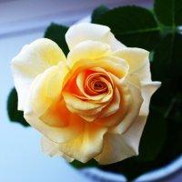 Роза :: Damir Si