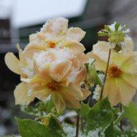 цветочки в снегу :: Наталья Ястребова