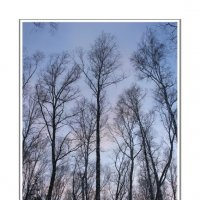 В лесу перед закатом. :: Ирина Ермолаева