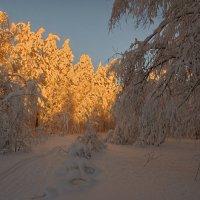 Вечернее солнце :: vladimir Bormotov