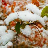 ранний снег :: mitro72 цимбал