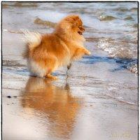 А вода холодная! :: Леонид