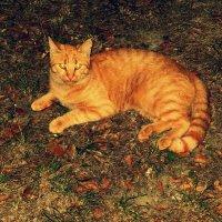 Маленький тигр :: Юлия Букша