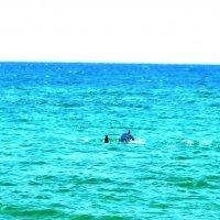 Дельфины в Благовещенское, Краснодарский край :: Виктор Дилянян