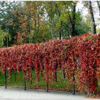 Окрасила осень багрянцем... :: Тамара (st.tamara)
