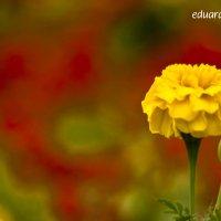 Flower :: Eduard Mirakyan