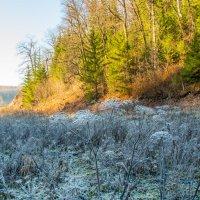Морозный Лог :: Константин Вергун