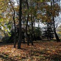 Осенний листопад :: Владимир Бровко