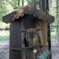 Сова в парковом зоопарке :: Владислав Крылов