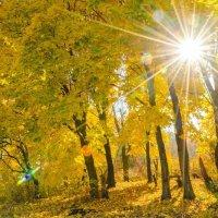 Золотая осень! :: Олег Полянский