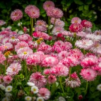 Цветы :: Александр Хорошилов