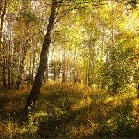 Осенние денёчки :: Любовь Белянкина