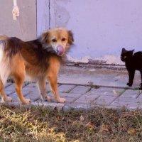 Кузя и котёнок :: Игорь Попов