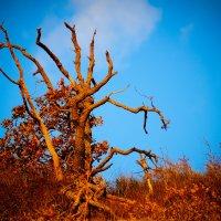 Ржавый мир под голубым небом :: Татьяна Гордеева