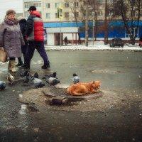 котик рыженький :: Виталий Нагиев