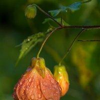 После дождя. :: Ирина Краснобрижая
