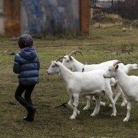 Пастушок :: Ирина Шарапова