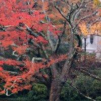 Осень :: anna borisova