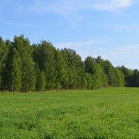 Леса-поля :: Вера Андреева
