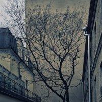 И на камнях растут деревья :: Александр Зайцев