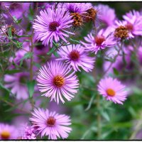 Лютики-цветочки :: Leo Alex Photographer