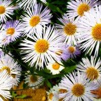 Цветы :: Алена Дорохина