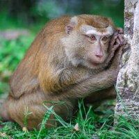обезьяны :: Евгений Л