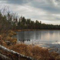 Озеро Гремячее, хатка бобра :: Елена Ерошевич