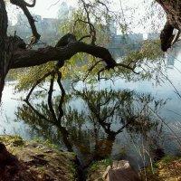 Наклонились ветви старой ивы над водой... :: Наталья