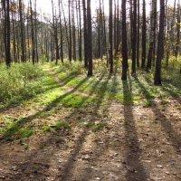 Осень-2012 - Img_7251 :: Андрей Лукьянов