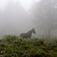 Лошадка в тумане :: Alex Sokolov