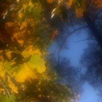 Моноклевая  осень..... :: Валерия  Полещикова