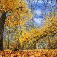 Осенний лес :: Мария Конкина