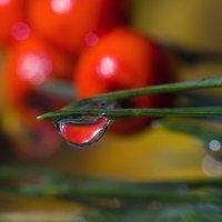 Осенняя капля росы :: sorovey Sol