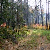 Дымка в осеннем лесу :: Елена Шемякина
