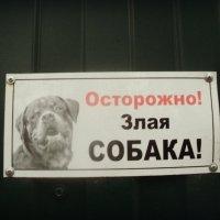 Висит на заборе табличка такая... :: Ольга Кривых