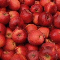 Ноябрьские яблочки :: Владимир Болдырев