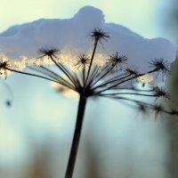 Зонтик в снегу :: Юлия