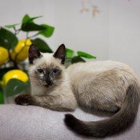 кошка :: андрей Язовских