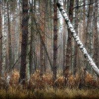 В джунглях ноябрьского леса...2 :: Андрей Войцехов