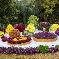 Выставка хризантем :: Андрей Нибылица