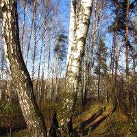 Осень-2012 - Img_8011 :: Андрей Лукьянов