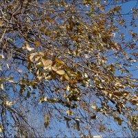 Шептались листья на ветру... :: Нина Корешкова