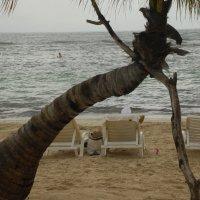 Обычные пляжные следы у необычного дерева... :: Владимир Смольников