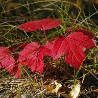 Осенние листья... :: Николай Кандауров
