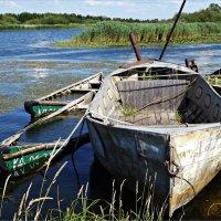 Старые лодчонки. :: Валерия Комова