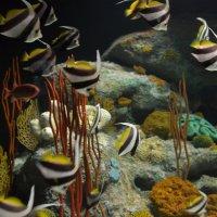 Рыбки в аквариуме :: Ольга Толмачева