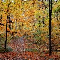 Такая красивая осень... :: *MIRA* **