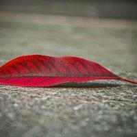 Осень. :: Виктор Чепишко